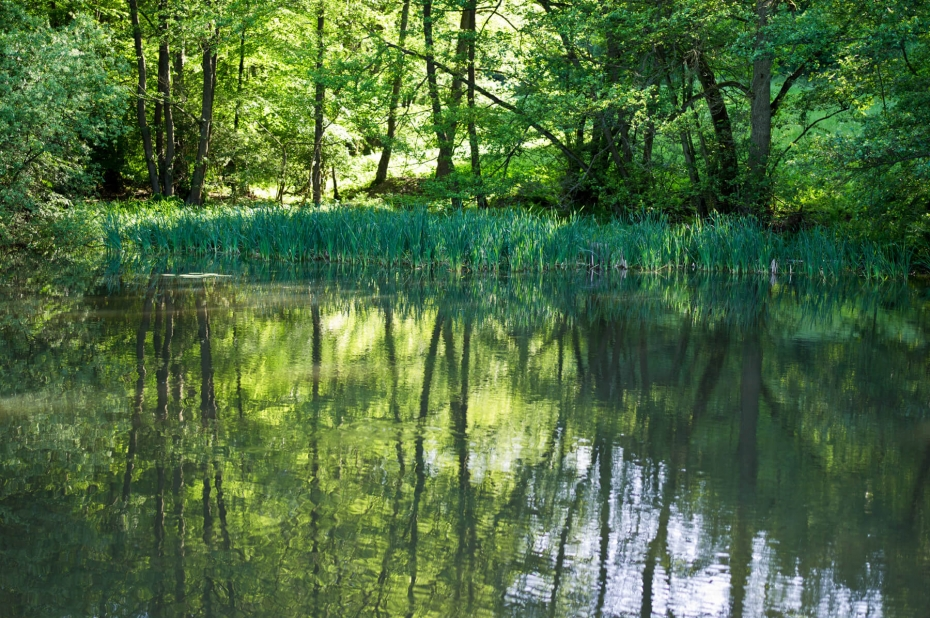 The pond of the hunting lodge today